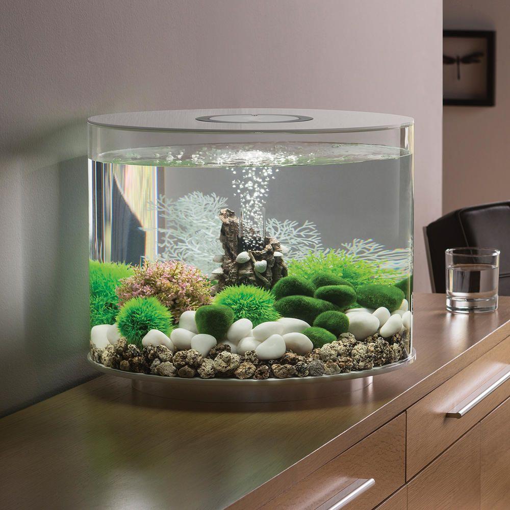 одна виды аквариумов для дома фото помощью различных